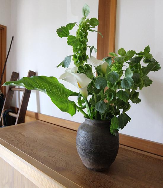 長持ちする花 モルセラ 5月6月 ブログ