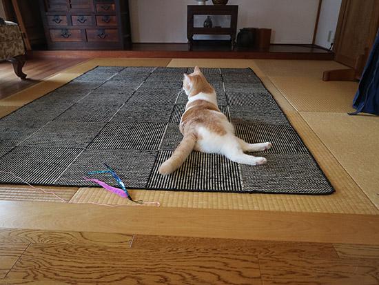 猫の爪とぎ対策 畳に絨毯