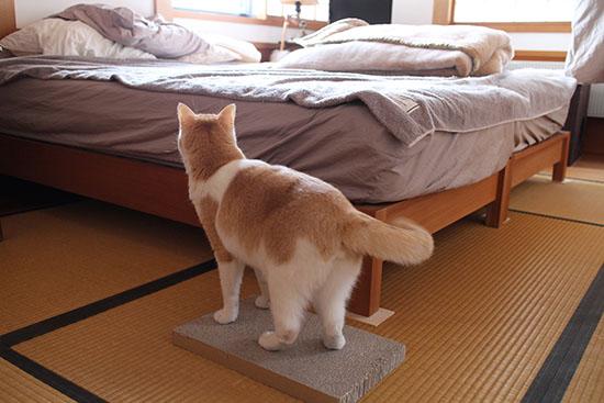 猫 爪とぎ防止 ベッドのマット 対策方法 1