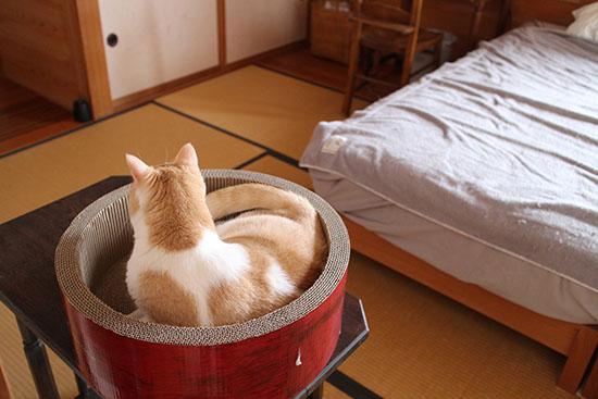 猫 爪とぎ防止 ベッドのマット 対策方法 2