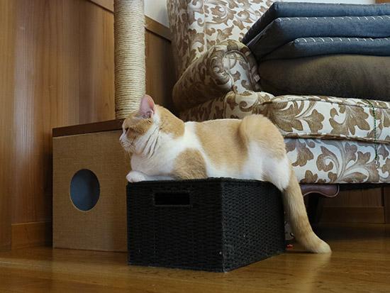 猫 爪とぎ対策 防止グッズ  11