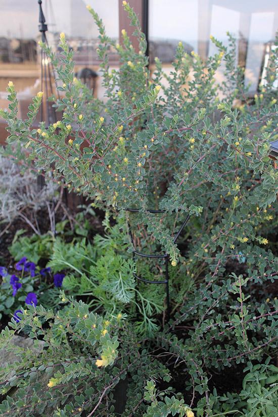 12月冬 ガーデン庭 花壇 開花 植物