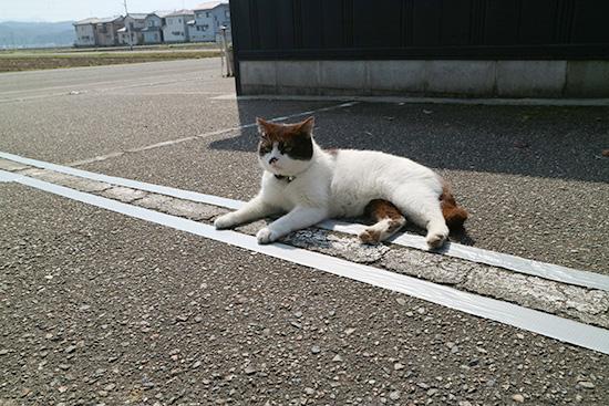 駐車場 白線消し方 体験談画像 ブログ 2