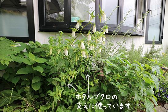 【背の高い草花 】植物が倒れる 防止 アイアン おしゃれ