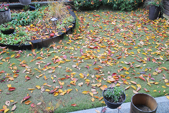 山桜 紅葉 色 落葉 12月