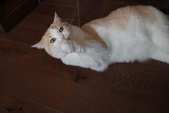 猫 ソファ爪とぎ対策 3