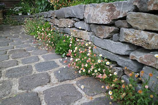 花壇 床 隙間 植栽 おすすめ植物