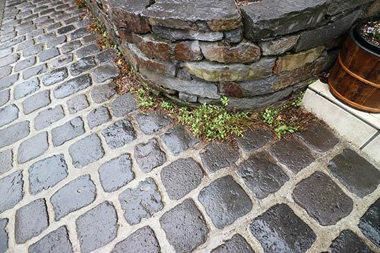 石畳の隙間 おすすめ 植物 草花 画像