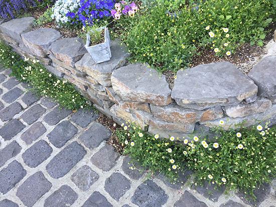 石畳 隙間 おすすめ花苗 エリゲロン