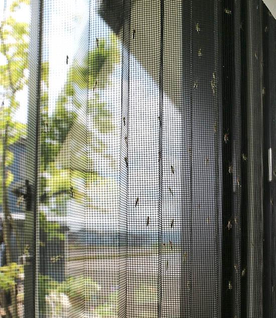 網戸 ユスリカ 蚊 びっしり 対策 駆除スプレー 効果 1