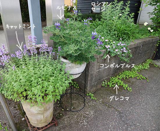 薄紫色の花 統一 植物 花壇