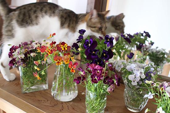ビオラ 花 終わる時期 楽しみ方 飾る