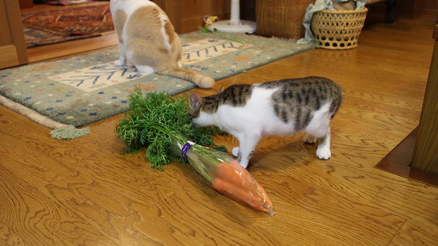 野菜の匂い 興味あり なし 猫5