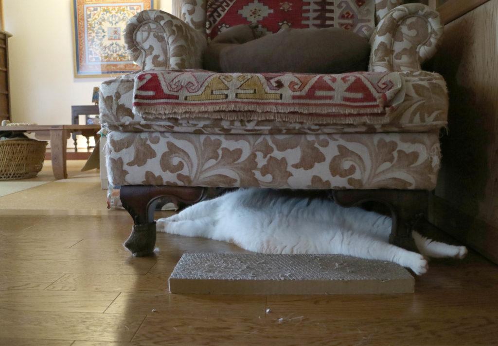 猫 熱中症 原因