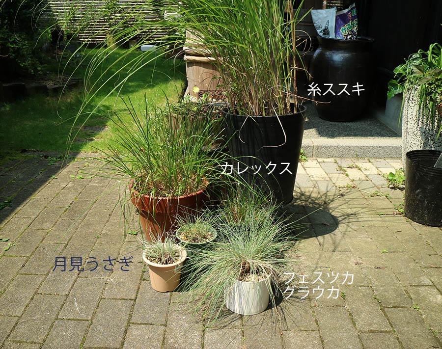 猫の草 食べる種類
